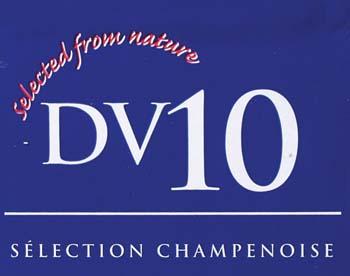 DV10 Dry Wine Yeast (80 g)