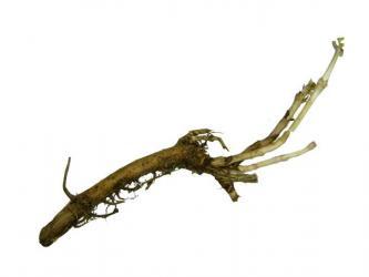 Rhizome - Cascade